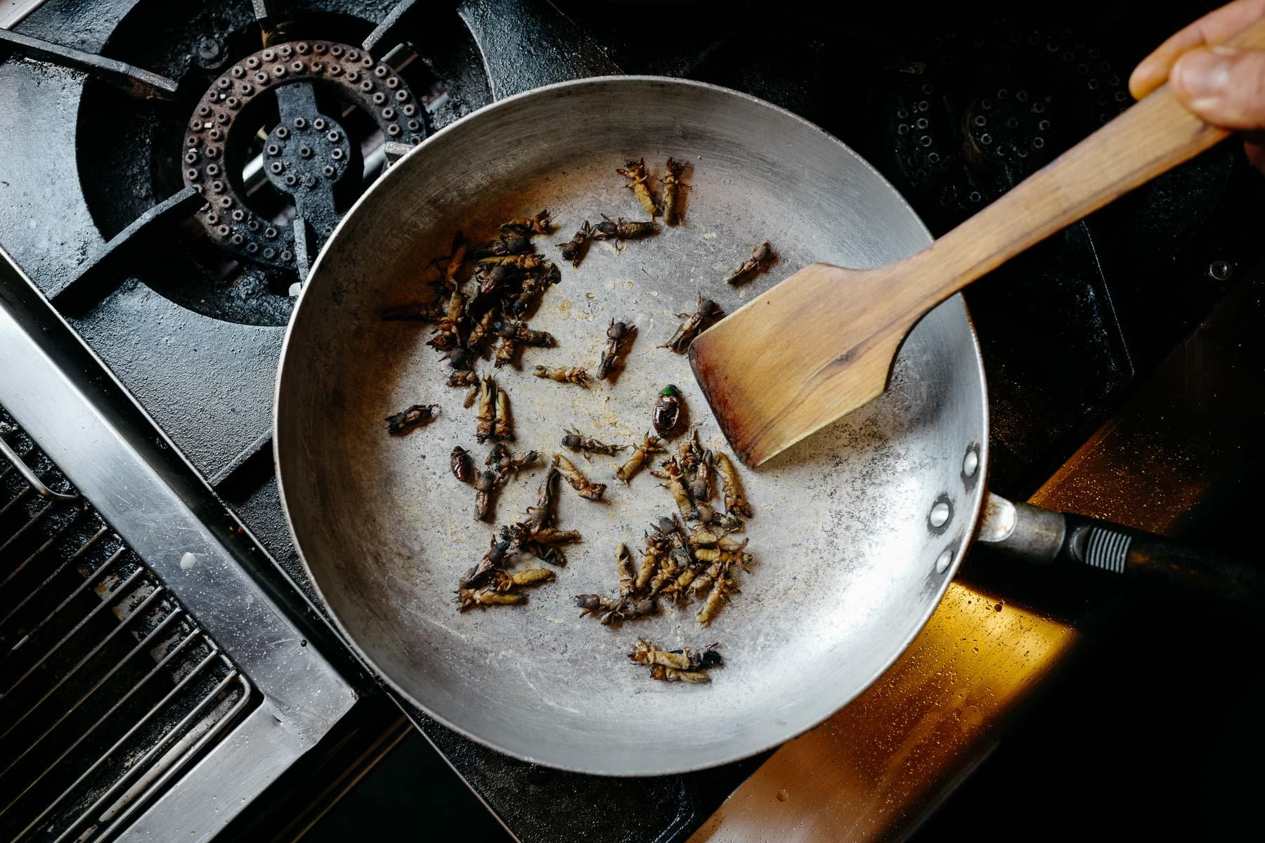 jedzenie owadów